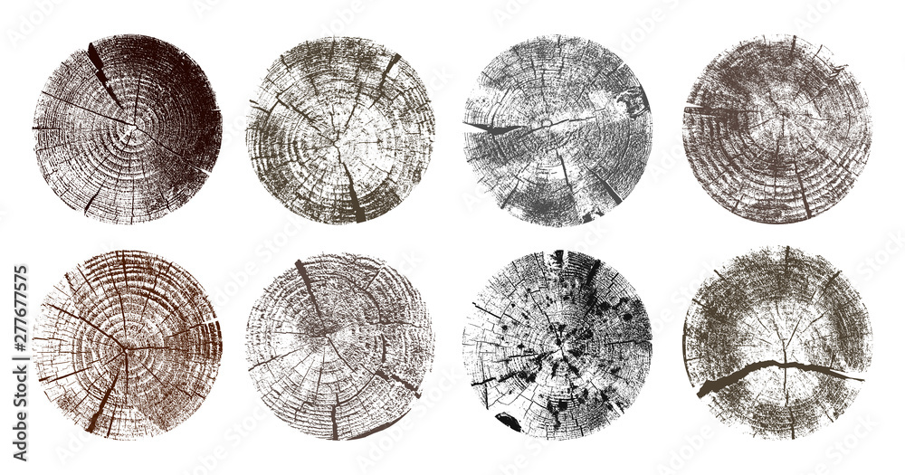 Fototapety, obrazy: Set of tree rings. Wood texture of wavy ring pattern from a slice of tree. Grayscale wooden stump. Vector illustration. Isolated on white background.