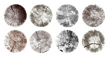 Set Of Tree Rings. Wood Texture Of Wavy Ring Pattern From A Slice Of Tree. Grayscale Wooden Stump. Vector Illustration. Isolated On White Background.