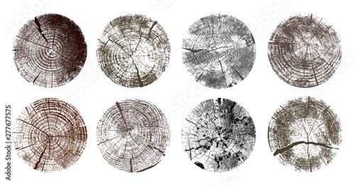 Fototapeta  Set of tree rings