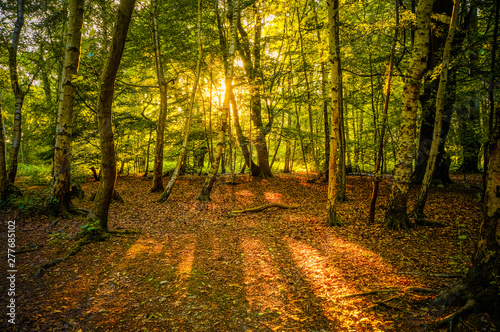 Warm sunshine breaking through the woods and casting long shadows on the earth of Epping Forest, Essex, UK фототапет