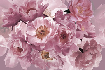 Panel Szklany Peonie Luxury background. Bouquet of pink garden flowers peonies close-up.