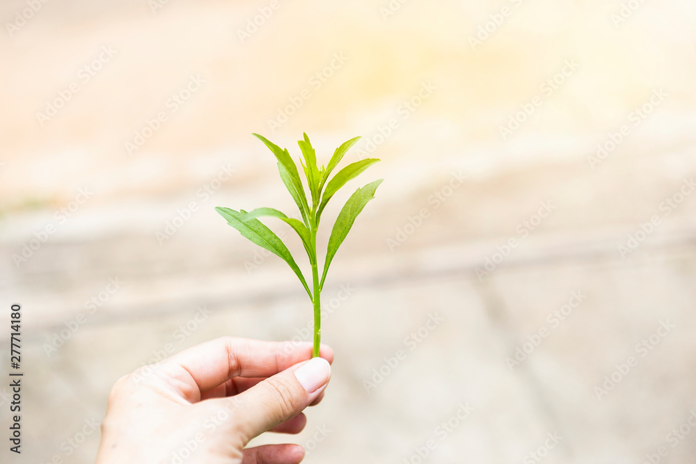 Fototapety, obrazy: Green young plant in girl hand over blurred background, outdoor day light