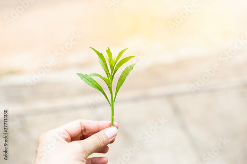 Green young plant in girl hand over blurred background, outdoor day light