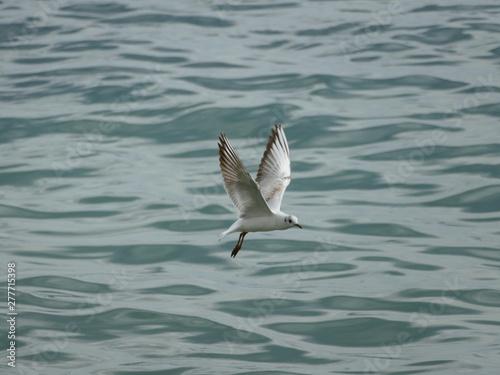 Gabbiano in volo sul mare Canvas Print