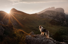 Dog On The Mountain At Sunset....