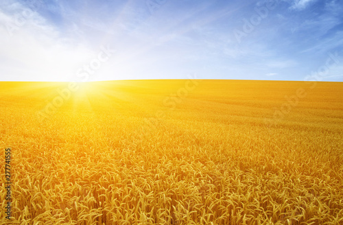 Poster Fleur Gold wheat flied panorama at sunset