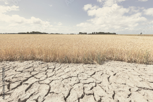 Valokuvatapetti Dry and arid land with failed crops due to climate change and global warming