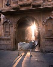 Bull In Archway