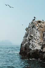 A Pelican Standing On Guano Covered Rock,Islas Ballestas,Paracas,Peru