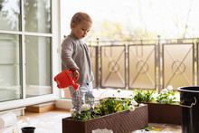 Cutle Little Girl Watering Flowers At Home