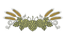 Illustration Of Hop And Barley For Brewing Isolated On White Background