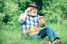 Mushrooming In Forest, Grandfather Hunting Mushrooms Over Summer Forest Background. Grandfather With Basket Of Mushrooms And A Surprised Facial Expression.