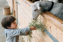 Back View Of Caring Kid In Blue Rubber Boots Feeding From Hand Cute Fluffy Goats Behind Wooden Pen