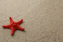 Red Starfish On Sand Background With Space For Text