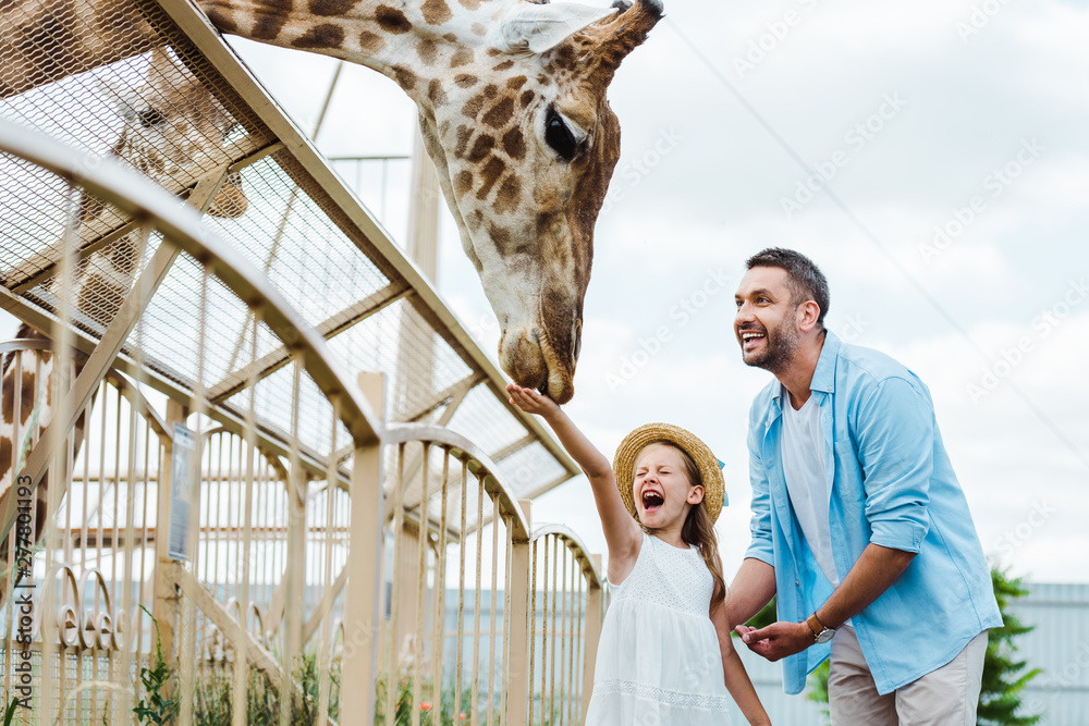 Fototapeta selective focus of cheerful man and kid with closed eyes feeding giraffe in zoo