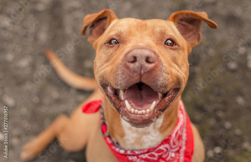 Photo A dog photographed for a California shelter, who has since been adopted!