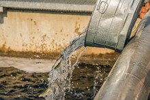 Young Trout Being Poured Into A Growout Tank At A Fish Hatchery