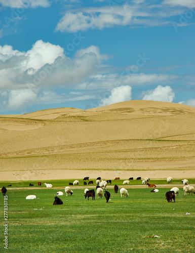 Sands Mongol Els Canvas Print