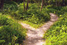 In The Forest In Summer The Wide Pedestrian Track Forked On Two Small Footpaths