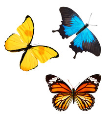 set of butterflies of different colors. isolated on white