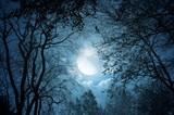 Fototapeta Fototapety na sufit - full moon in the sky
