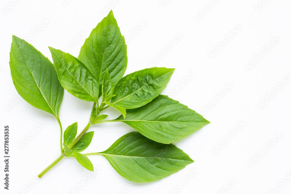 Fototapety, obrazy: Sweet Basil leaves on white background.