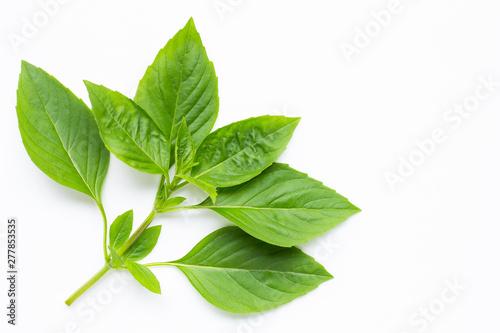 Pinturas sobre lienzo  Sweet Basil leaves on white background.