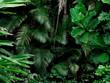 canvas print picture - Tropical Rainforest Landscape background. Tropical jungle palms, trees and plants