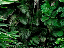 Tropical Rainforest Landscape ...