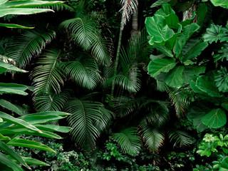 Fototapeta Las Tropical Rainforest Landscape background. Tropical jungle palms, trees and plants