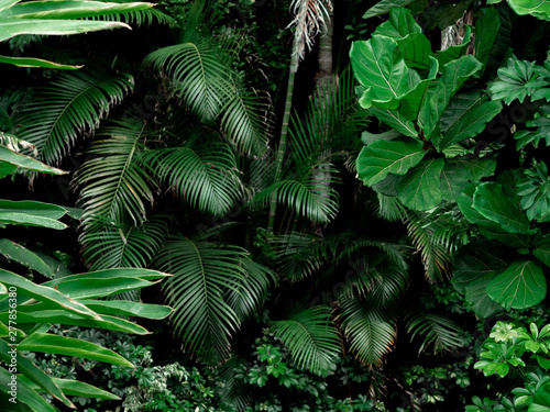 Fotomural Tropical Rainforest Landscape background