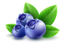 Wild Blueberry Berries With Gr...