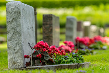 Grave Stones In A Row With Red And Pink Flowers