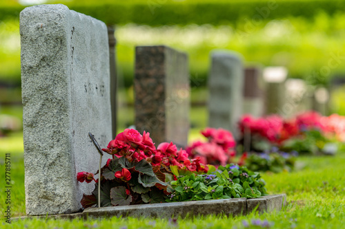 Canvas Print Grave stones in a row with red and pink flowers