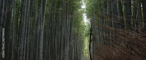 Foto auf Gartenposter Straße im Wald bamboo forest kyoto japan