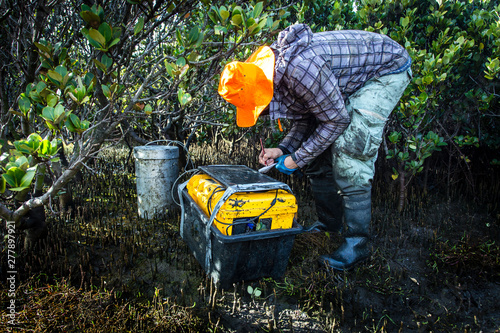 Valokuva  Scientist measuring greenhouse gas emissions at a mangrove forest