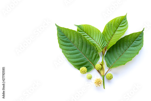 Photo Leaves of Kratom or mitragynine with fruits and flowers on white background isol