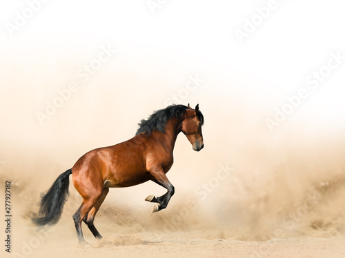 Foto op Canvas Paarden Wild horse in prairies