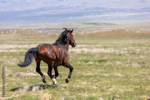 Magnificent Wild Horse in the Utah Desert