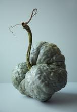 Gourd Still Life