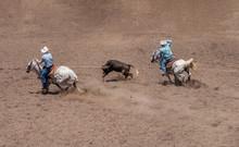Team Roping At A Rodeo. A Calf...