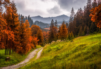 Fototapeta 3D Autumn Landscape with Hiking Trail or Footpath with Mountains in Background in Slovakia