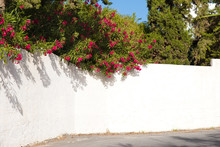 Red Bougainvillea On A White W...