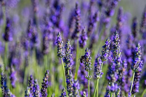 Fototapeta premium Motyle 23