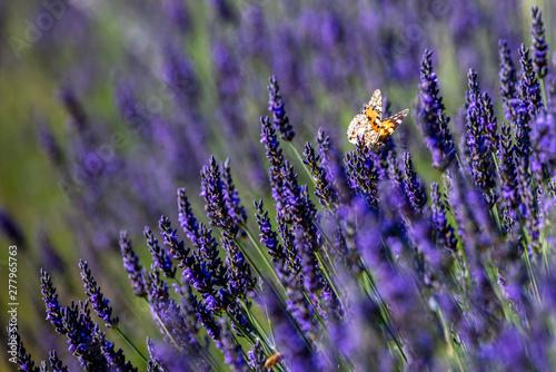 Fototapeta premium Motyle 21