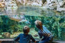Children Watch The Sea Turtle In The Aquarium