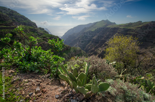 View of Valle Gran Rey with some plants in the foreground, La Gomera, Spain Wallpaper Mural