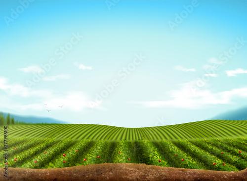 Fototapeta Green field background obraz