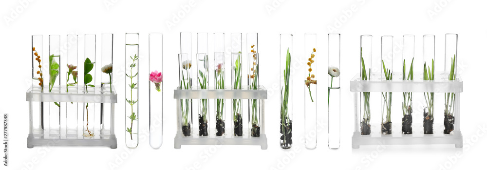 Fototapety, obrazy: Laboratory test tubes with plants on white background