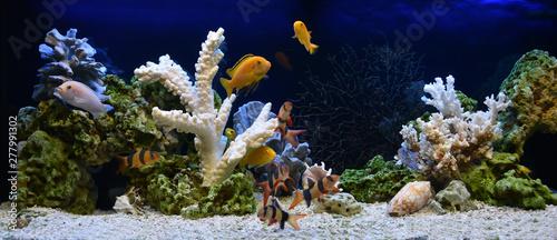 Naklejki akwarium  akwarium-slodkowodne-w-stylu-pseudo-morskim-aquascape-i-aquadesign